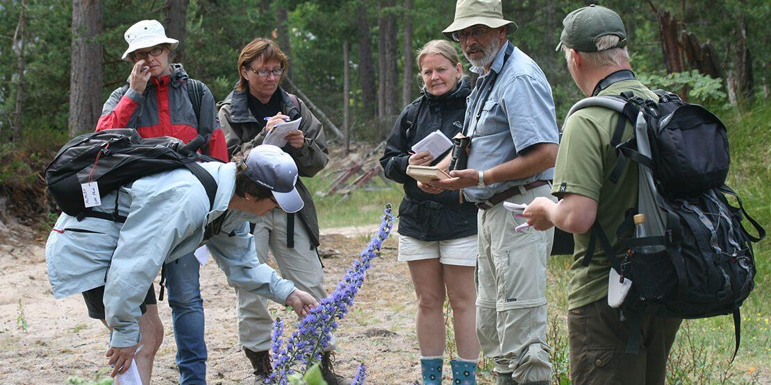 Botanikkurs på Gotska Sandön, 23-28 juni 2019