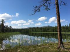 Kulningskurs i fjällmiljö med Katarina Hallberg 21-23 maj 2020