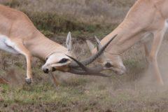 Kurs i konflikthantering – distanskurs